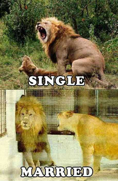 Single vs married men