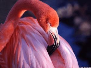 Fake Flamingoes